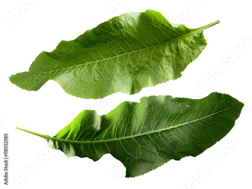 Fotografie, Obraz  Horseradish leaves, clipping paths