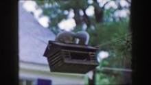 1959: Squirrel Invader Bird Fe...