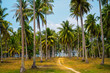 Exotic coconut palms summer landscape. Way to the beach. Summer vacation landscape