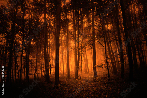 Dark red colored mystery foggy forest trees background.