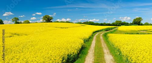 Poster de jardin Orange Small Dirt Road through Fields of Oilseed Rape in Bloom, Spring Landscape under Blue Sky