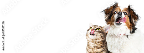 Funny Hungry Cat and Dog Horizontal Banner