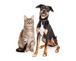 Happy Smiling Tabby Cat and Crossbreed Dog