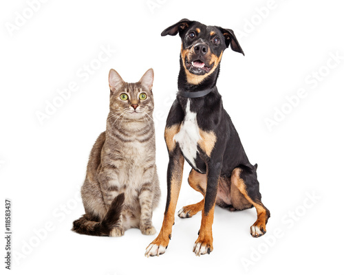 Happy Smiling Tabby Cat and Crossbreed Dog © adogslifephoto