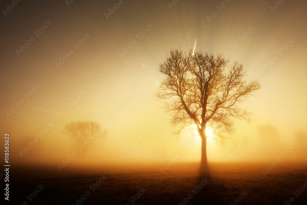 Solitary Tree on Meadow in Dense Fog at Sunrise