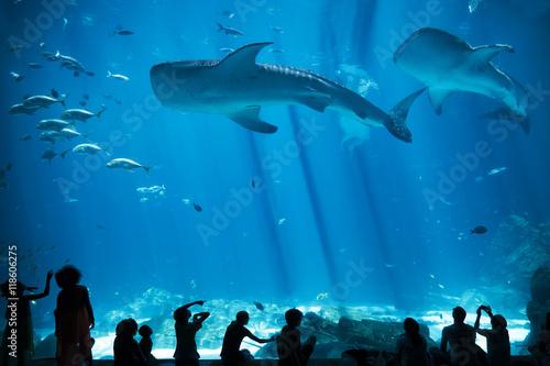 Plakat Sylwetki dzieci w dużym akwarium z ryb i rekin wielorybi