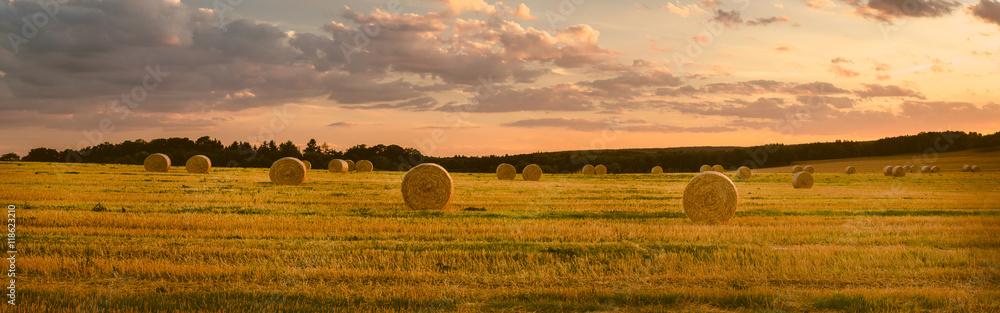 Fototapety, obrazy: Landschaft im Sommer, abgeerntetes Kornfeld, Panorama