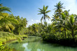 Coconut palms of Indonesia
