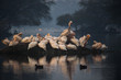canvas print picture - Nordindien - Bharatpur - Pelikan im Keoladeo National Park