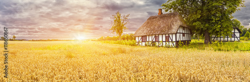 Fototapeta  Typical Danish Picturesque old houses and wheatfield at Sunrise