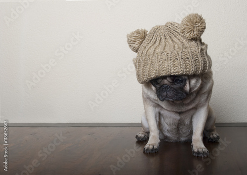 Door stickers Dog Hond, Mopshond, met gebreide muts op houten vloer kijkt verdrietig