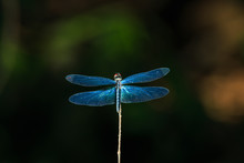 Dragonfly Close Up Eyes, Insec...