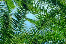 Background Of Palm Leaves And Blue Sky