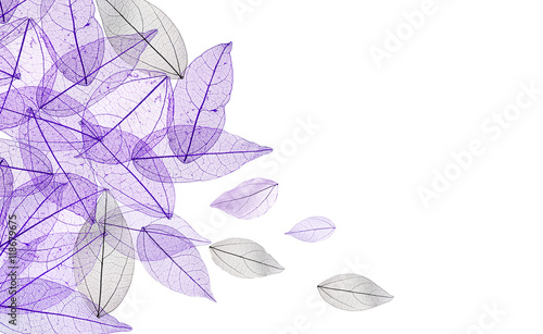 Canvas Prints Decorative skeleton leaves Decorative skeleton leaves on white background. Space for text.