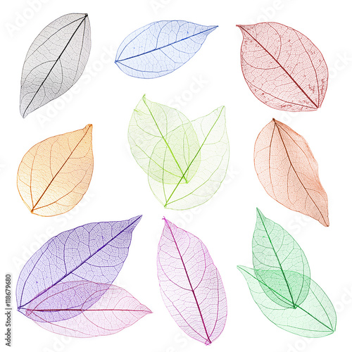 Canvas Prints Decorative skeleton leaves Collage of decorative skeleton leaves on white background.