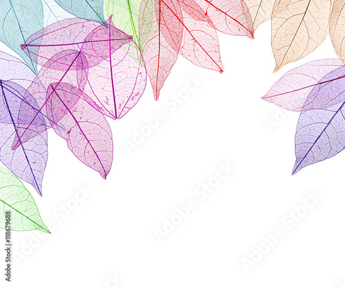 Recess Fitting Decorative skeleton leaves Decorative skeleton leaves on white background. Space for text.