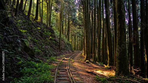 Poster Voies ferrées Lost Forest
