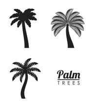 Palm Tree Tropical Nature Summer Beach Plant Icon Set. Silhouette And Isolated Design. Vector Illustration
