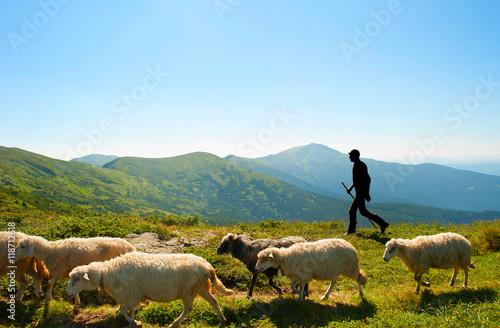 Fotografie, Obraz  Herdsman in the mountains