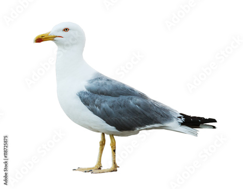 Sea gull profile on white background Wall mural