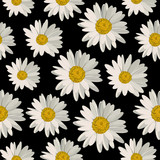 Seamless pattern with daisy flowers