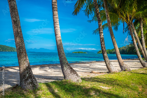 In de dag Tropical strand Coconut palm tree on beautiful tropical island beach