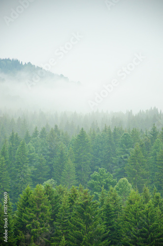 Poster Forets thick morning fog in the summer forest.