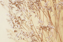 Dry Flower Grass For Background