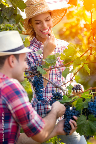 Papiers peints Vignoble Smiling woman eating grape while man picking grapes