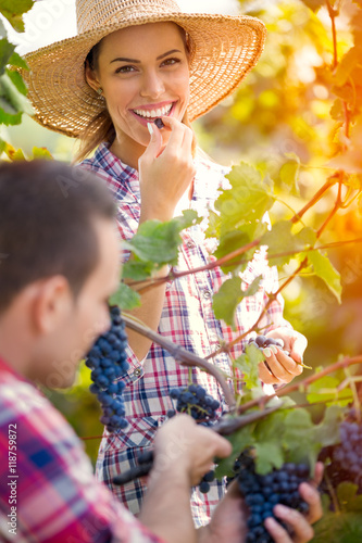 Papiers peints Vignoble Couple together working in vineyard