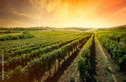 Montage in der Fensternische Landschappen Beautiful vineyard with sunset sky