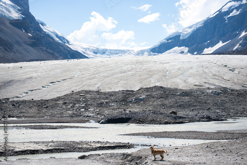 Valokuva  a dog is staring at a glacier lake and people hiking at Athabasca Glacier in Ice