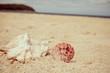Seashell on sand on tropical island beach