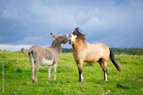 Poster Ezel welsh pony and gray donkey