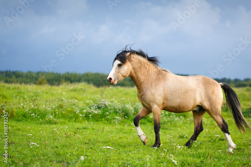 Poster Ezel welsh pony