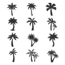 Tropical Palm Tree Vector Icons Set. Silhouettes On The White Background