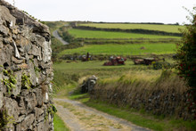Stone Wall And Country Lane Th...