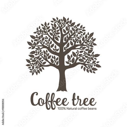 Hand Drawn Graphic Tree With Coffee Beans Vector Illustration For Labels Packs Logo Design Stock Vector Adobe Stock