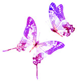 Fototapeta Buterfly - butterfly,watercolor, isolated on a white