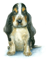 Watercolor Basset Hound Puppy On White Background