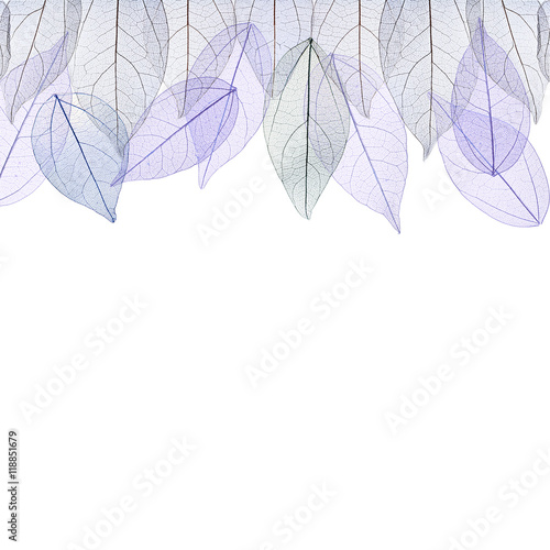 Poster Decorative skeleton leaves Decorative skeleton leaves on white background. Space for text.