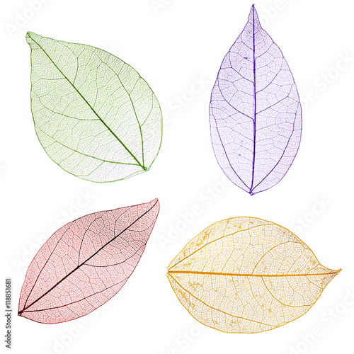 Poster Squelette décoratif de lame Collage of decorative skeleton leaves on white background.