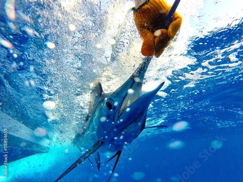 Cuadros en Lienzo Blue Marlin Release