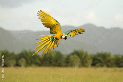 Photo sur Toile Perroquets Motion blur Parrots flying in the sky.