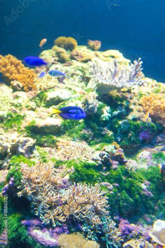 Fotografie, Tablou  aquarium