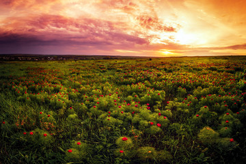 Fototapeta Vintage meadow