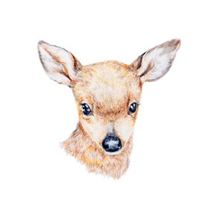 Watercolor painting a small deer
