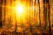 Wald im Herbst bei Sonnenschein
