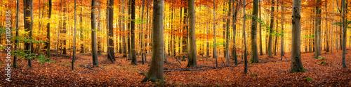 Canvas Prints Honey Wald im Herbst Panorama Hintergrund