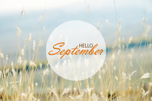 Hello September Wallpaper, Autumn Background With Dried Plants